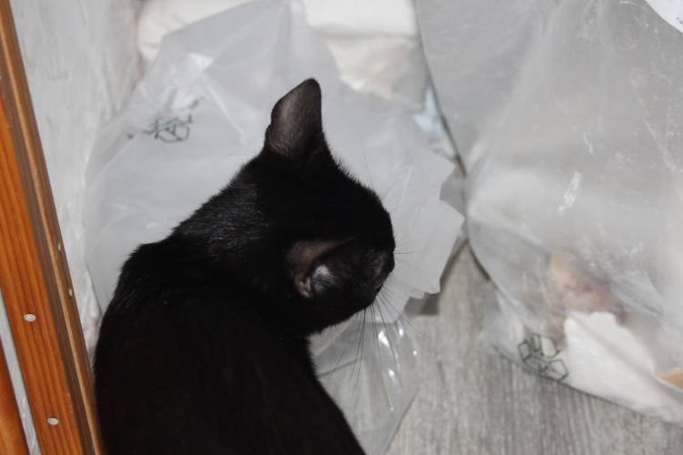 Shadow le chaton de travaux...