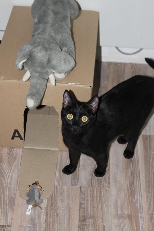 Shadow découvre sa cabane. Sur le toit c'est son pauvre doudou.