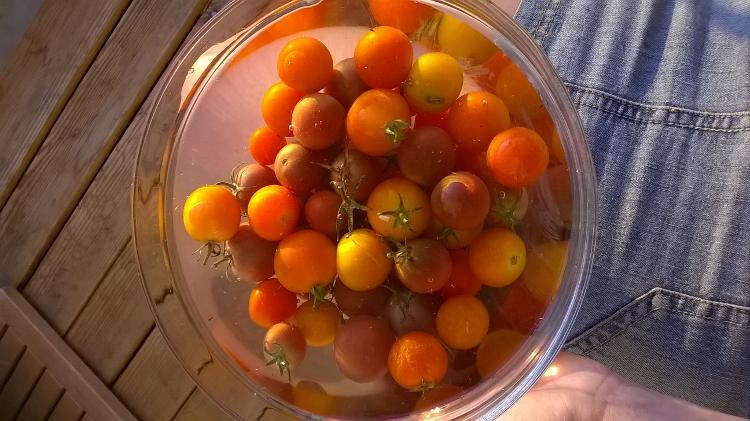 Délicieuses tomates cerises anciennes. En direct de chez le producteur bio.