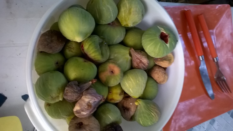 Et encore des figues. C'est incroyable ce que l'on a pu en manger.