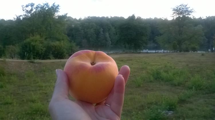 Jamais sans un fruit!
