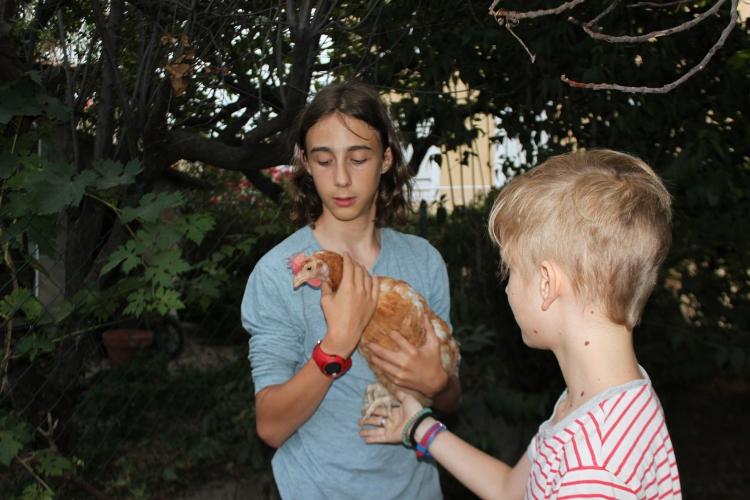 poules rescapées